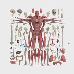 Human anatomy flat lay illustration of body parts. Natural tones on light background.