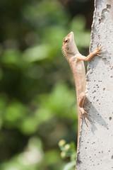 Thailand chameleon on a cement pole.