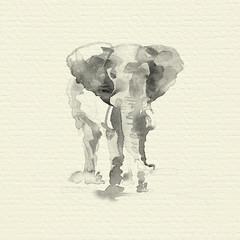 Hand drawn elephant.  Watercolor illustration.
