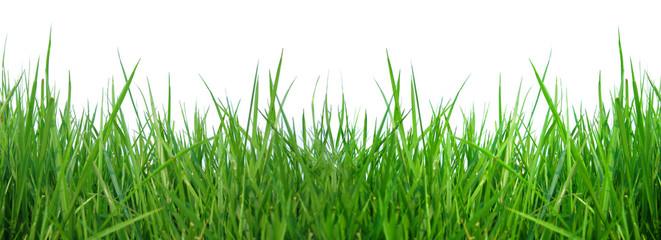 close up fresh spring green grass panorama