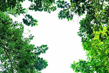 Green leaf frame border isolated on white background