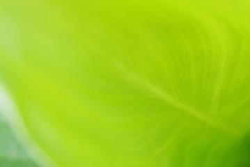 green leaf close up soft focus, nature background and wallpaper