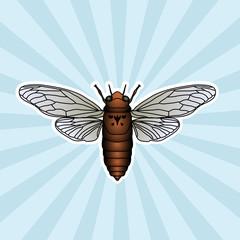 Insect anatomy. Sticker cicada. Cicadidae. Chremistica umbrosa. Sketch of cicada.  cicada Design for coloring book. hand-drawn cicada. Vector