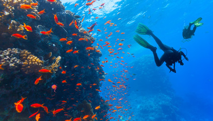 Wall Murals Diving Scuba diver explore a coral reef