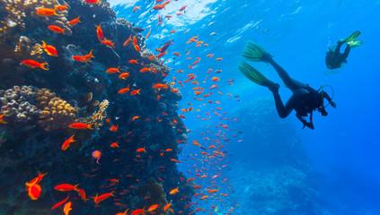 Photo Blinds Diving Scuba diver explore a coral reef