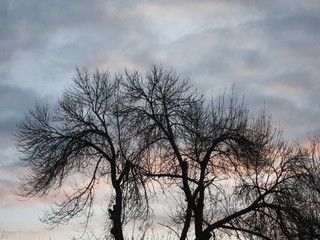 Silhouette of tree crowns at dawn