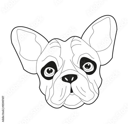 Black And White French Bulldog Head Vector Testa Di Bulldog