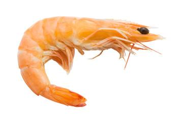 Boiled shrimp isolated on white background