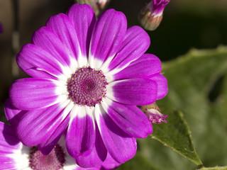 Primer plano de flor lila y blanca