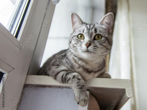 indoor cat become outdoor cat