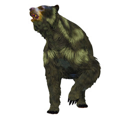 Arctodus Bear on White - Arctodus or Short-faced Bear is an extinct mammal that lived in North America in the Pleistocene Age.