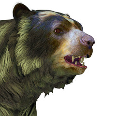 Arctodus Bear Head -Arctodus or Short-faced Bear is an extinct mammal that lived in North America in the Pleistocene Age.