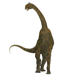 Atlasaurus on White - Atlasaurus was a large herbivorous dinosaur that lived in the Jurassic Period of Morocco, North Africa.