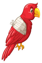 Parrot bird is injured