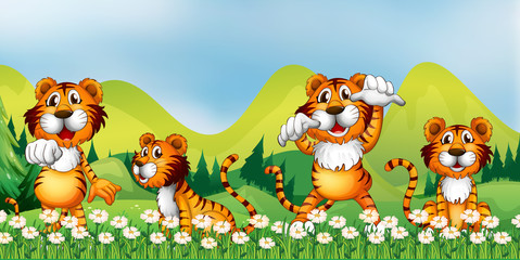 Four tigers in the flower field