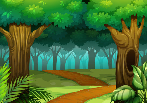 Forest scene with trail in the woods