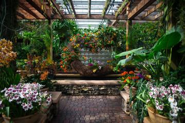 Blooming orchids in a beautiful indoor garden