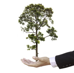 businessman hand holding a tree isolate on white background