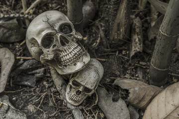 still life with human skull in the forest