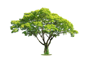 Tree isolated on white background. Clipping path.