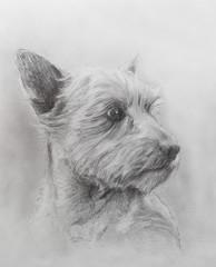 Dog pencil drawing on old paper, vintage paper. Dog portrait.