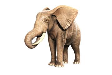 Freigestellter Elefant am Fressen (gerendertes Bild)