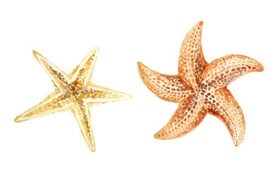 Watercolor starfishes