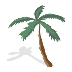 Coconut palm trees isolated on white background. Palm tree on a