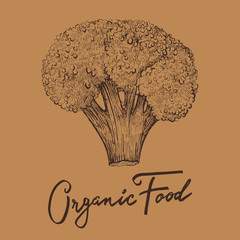 Hand drawn vector illustration with broccoli. Organic food