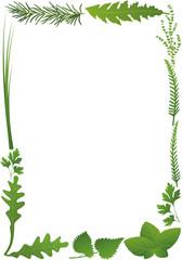 Herbs vertical frame. Isolated vector illustration on white background.