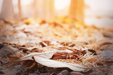 autumn leaves in beautiful fall park, the over sunlight [blur and selective focus background]