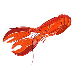 Lobster sea food vector