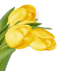 Yellow flowers isolated on white. EPS 10