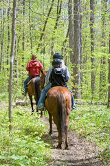 Horseback Riding in the Forest – A family rides their horses in the forest. One adult and two children.