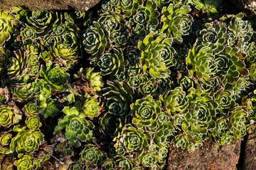 Pflanzen auf Stein
