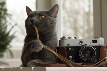 Cat photographer or fine-tuning/background with a cat that sets up an old camera