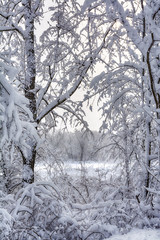 A snowy scene along a frozen river with limbs weighed down by the heavy snowfall from winter storm Seneca in northern Wisconsin, 2014.