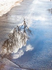 trees and clouds reflected in puddle in spring