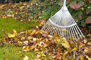 Autumn leaves with rake on green garden lawn