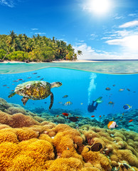 Underwater coral reef with scuba diver and turtle