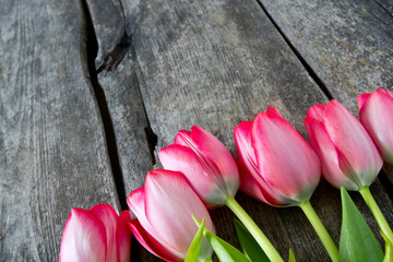 pink tulips on wooden surface