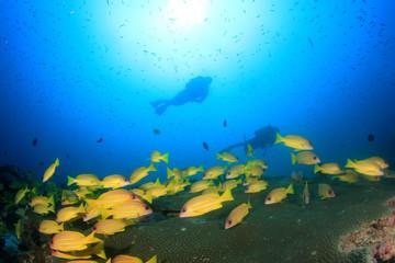 Scuba diving exploring coral reef