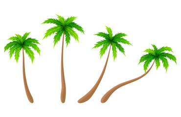 Set of vector palm trees. Cartoon collection of palm trees. Vector illustration.