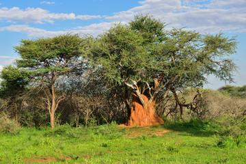 Namibia, termite mound