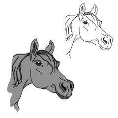 Gray horse head