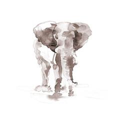 Elephant. Watercolor illustration on white background. Sepia.