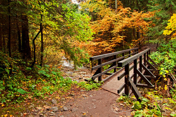 Track path with bridge in mountain forest