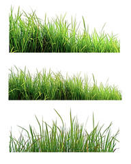 Fotobehang Gras Green Grass isolated on white nature background