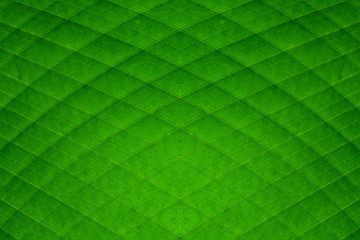 green banana leaf diamond stripes abstract background