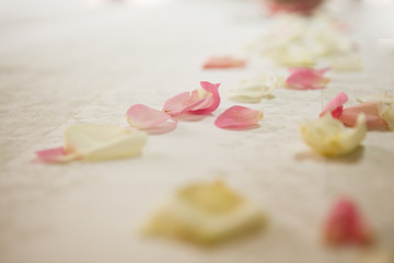 Closeup of rose petals